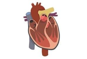 heart-cartoon-pic